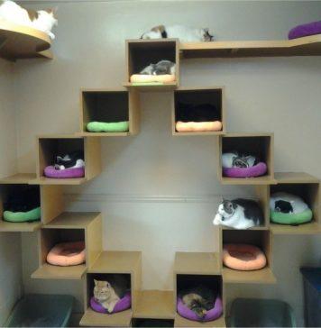 Desain tempat tidur kucing unik yang bisa kamu buat sendiri: kalau ini khusus untuk kamu yang punya banyak pasukan anabul.