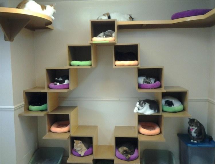 tempat tidur kucing unik - 7 Desain Tempat Tidur Kucing Unik yang Bisa Kamu Buat Sendiri