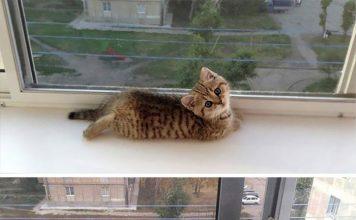 transformasi kucing dulu vs sekarang 356x220 - Beranda