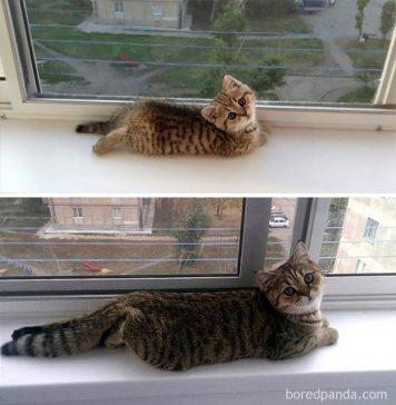 Foto-foto transformasi seleb kucing dulu vs sekarang ini bakal membuatmu meleleh.