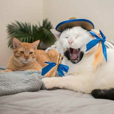 Mengenal perbedaan pola warna tabby pada kucing.