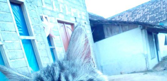 Molly, kucing yang suka narik rok.