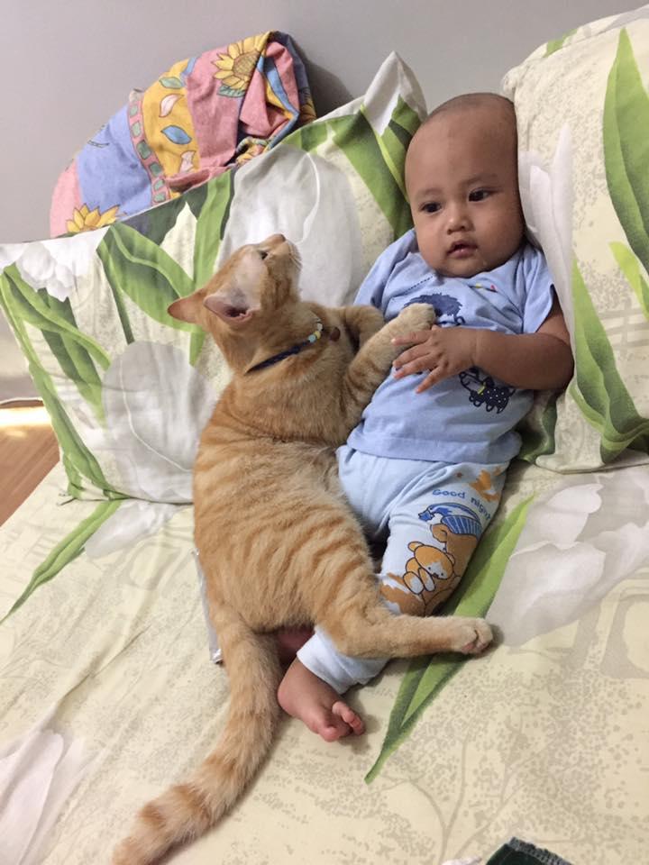 foto orang tua lebih sayang kucing - Viral, Foto Orang Tua Lebih Sayang Kucing Dibanding Anaknya, Ternyata ini yang Terjadi