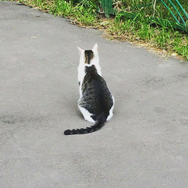 kucing dengan motif bulu tak biasa - 13 Kucing dengan Motif Bulu yang Tak Biasa