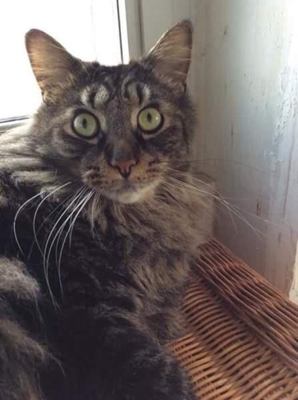 kucing dengan motif bulu tak biasa12 - 13 Kucing dengan Motif Bulu yang Tak Biasa