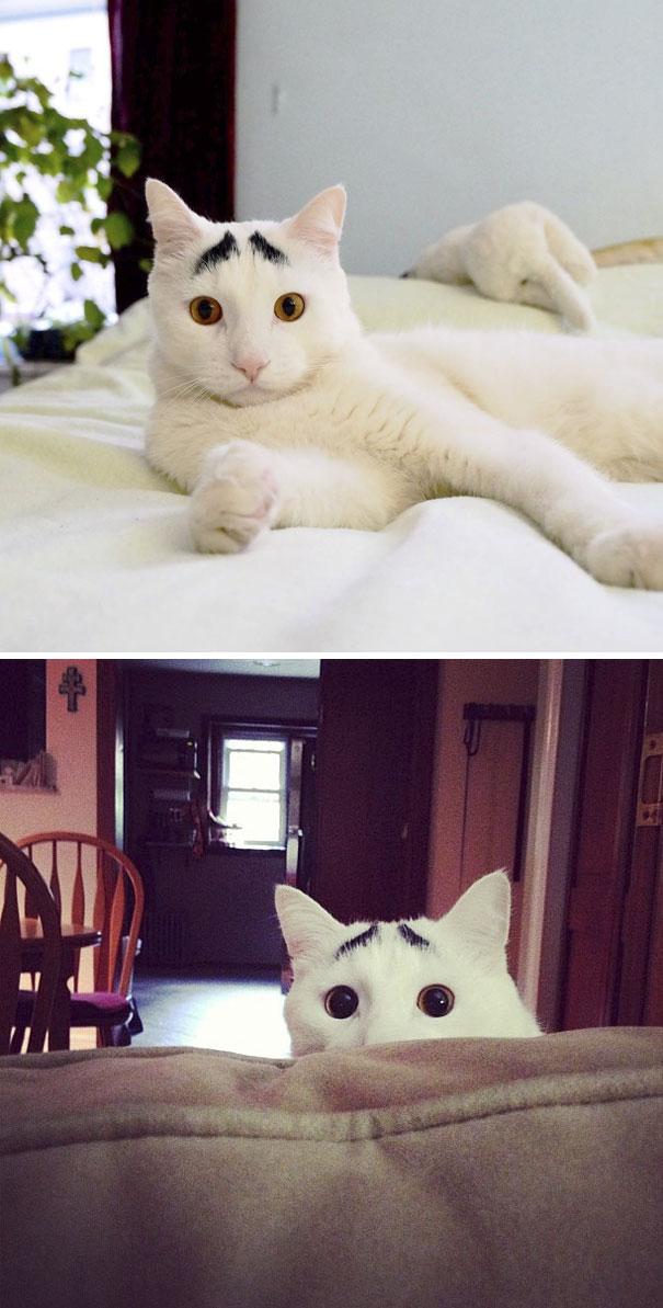 kucing dengan motif bulu tak biasa2 - 13 Kucing dengan Motif Bulu yang Tak Biasa