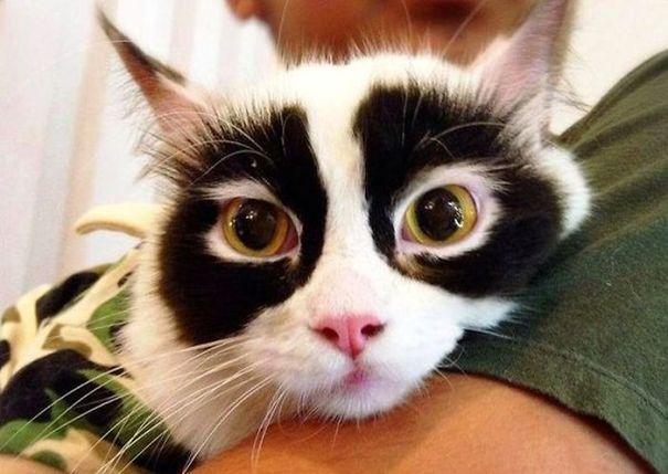 kucing dengan motif bulu tak biasa5 1 - 13 Kucing dengan Motif Bulu yang Tak Biasa
