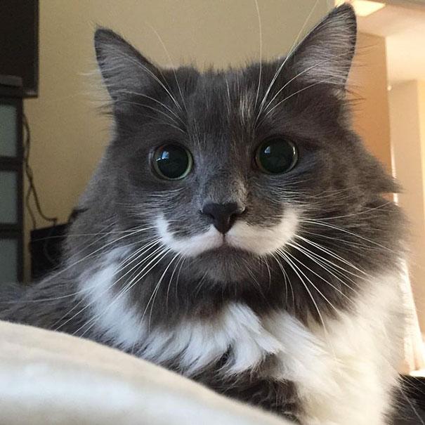kucing dengan motif bulu tak biasa5 - 13 Kucing dengan Motif Bulu yang Tak Biasa