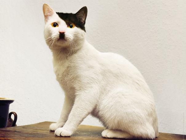 kucing dengan motif bulu tak biasa9 - 13 Kucing dengan Motif Bulu yang Tak Biasa