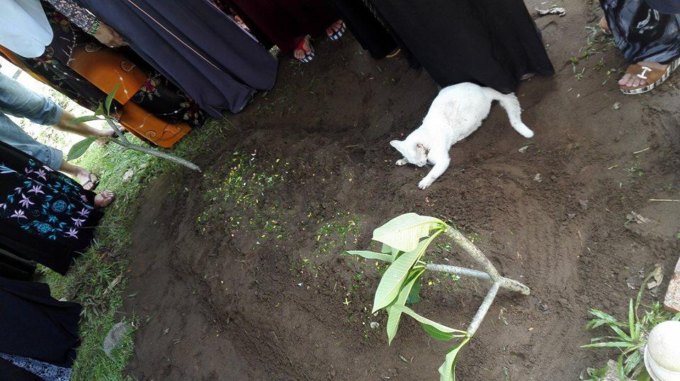 Kucing ini enggan tinggalkan makam tuannya. Gambar : Soffuan CZ
