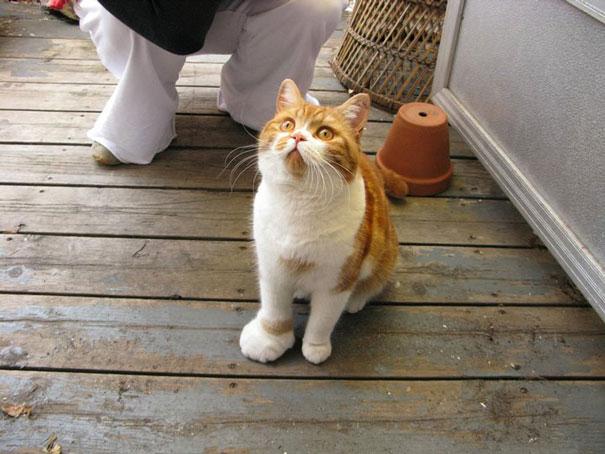 kucing tersengat lebah2 - Antara Kasihan tapi Pengen Ketawa, Lihat Wajah Kucing ini Setelah Tersengat Lebah