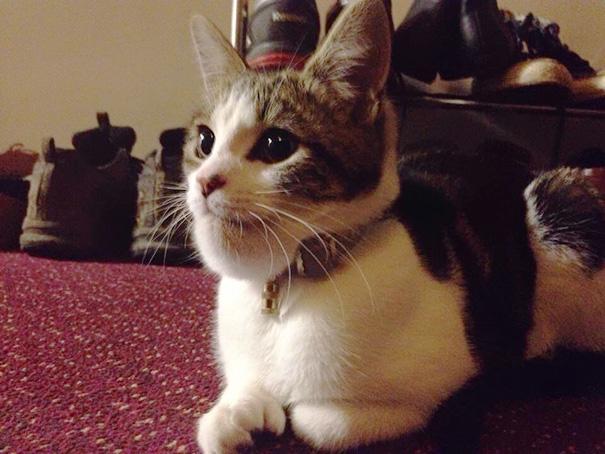 kucing tersengat lebah3 - Antara Kasihan tapi Pengen Ketawa, Lihat Wajah Kucing ini Setelah Tersengat Lebah