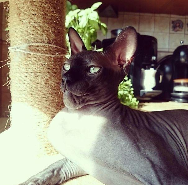 kucing tersengat lebah6 - Antara Kasihan tapi Pengen Ketawa, Lihat Wajah Kucing ini Setelah Tersengat Lebah
