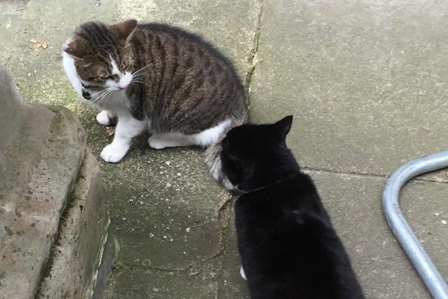 Palmerston digadang-gadang sebagai rival dari ketua chief mouser, Larry.