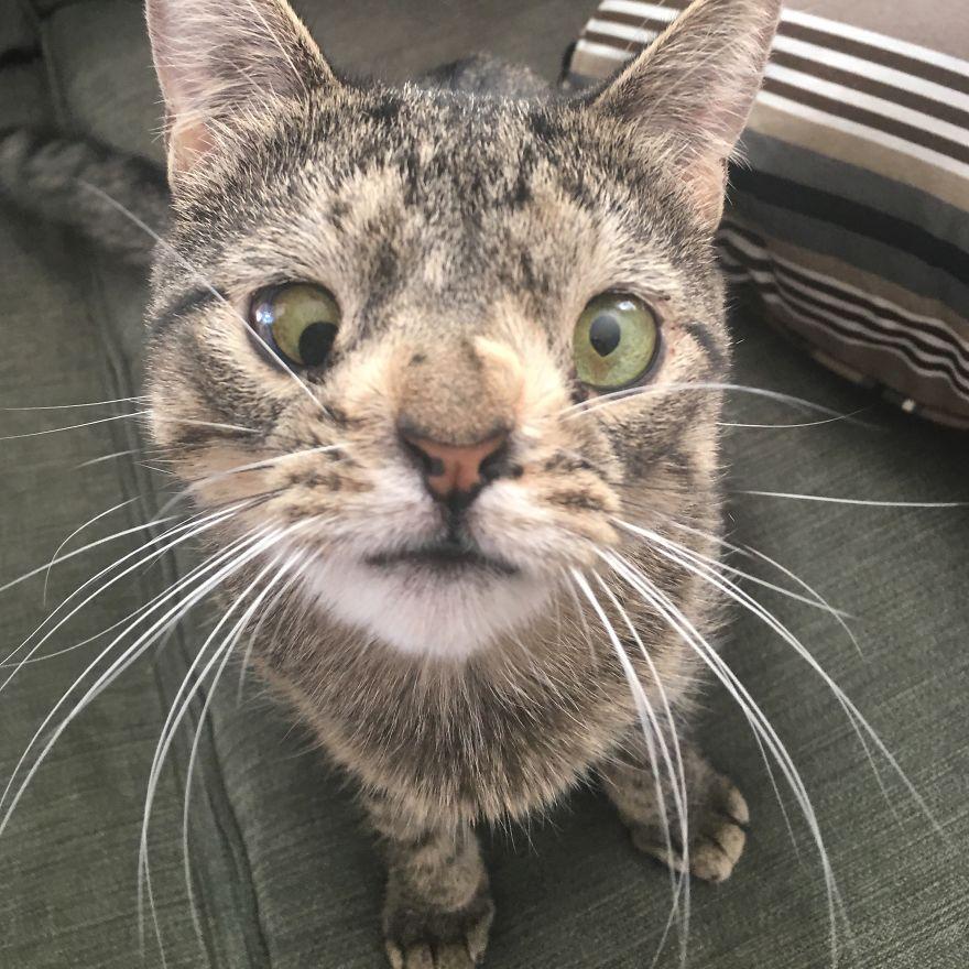 Terancam Disuntik Mati, Maya Kucing dengan Kelainan Kromosom kini Temukan Kebahagiaan Komplit