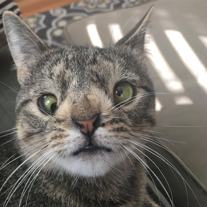 Gambar : Maya the Cat