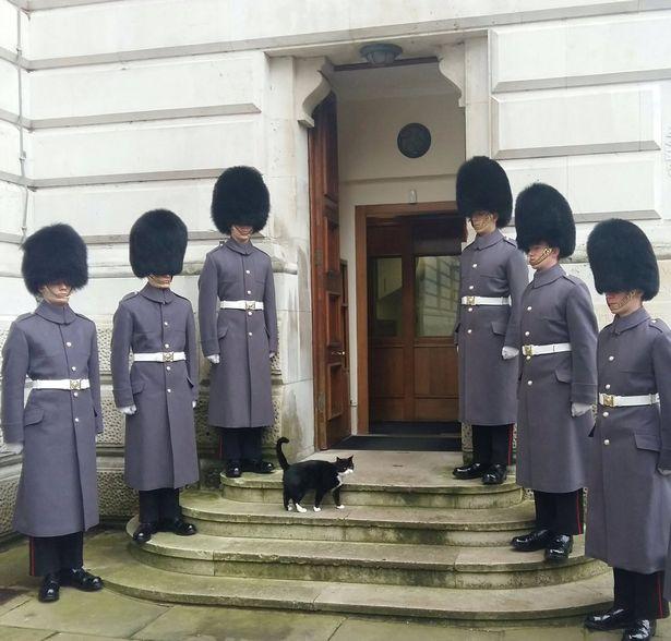 Chief Mouser, adalah jabatan yang diberikan untuk kucing yang bertugas untuk memburu tikus.