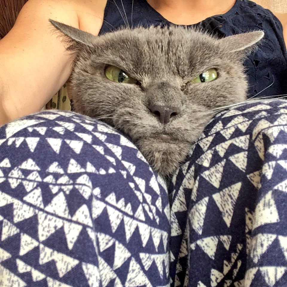 shamo5 - Tak Ada yang Mau Mengadopsi Kucing ini karena Punya Wajah Pemarah