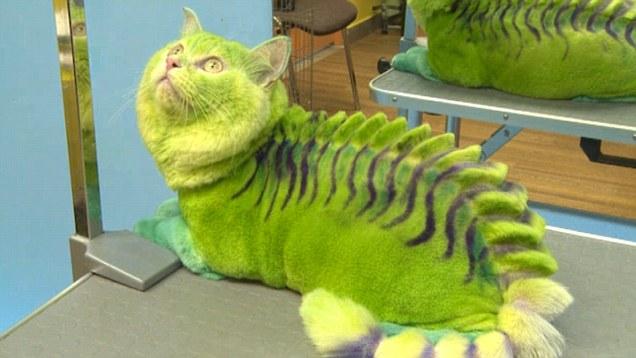 Tren Mewarnai Kucing Dan Anjing Di Rusia Kucing Lucu Net