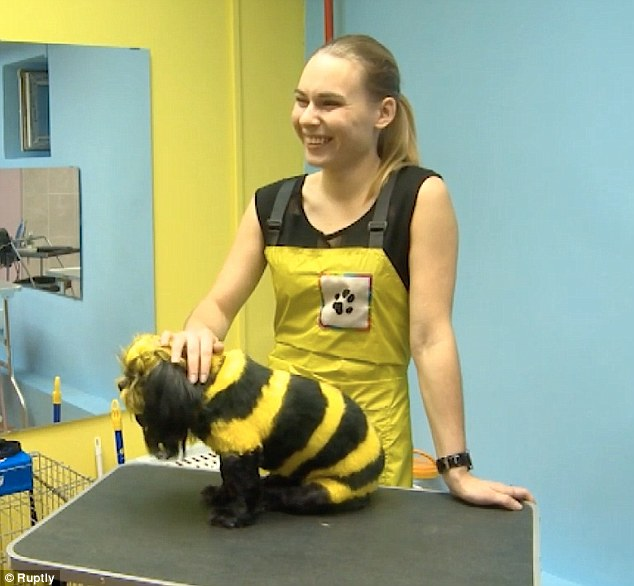 Ekaterina mengatakan ia ingin membuat anjingnya berwarna agar musim panas terlihat lebih cerah.