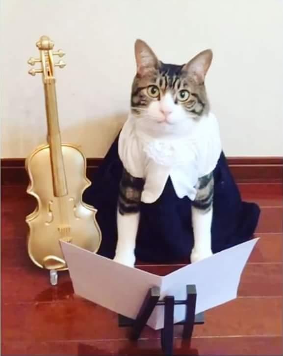 7 pekerjaan manusia yang dimiliki oleh kucing.