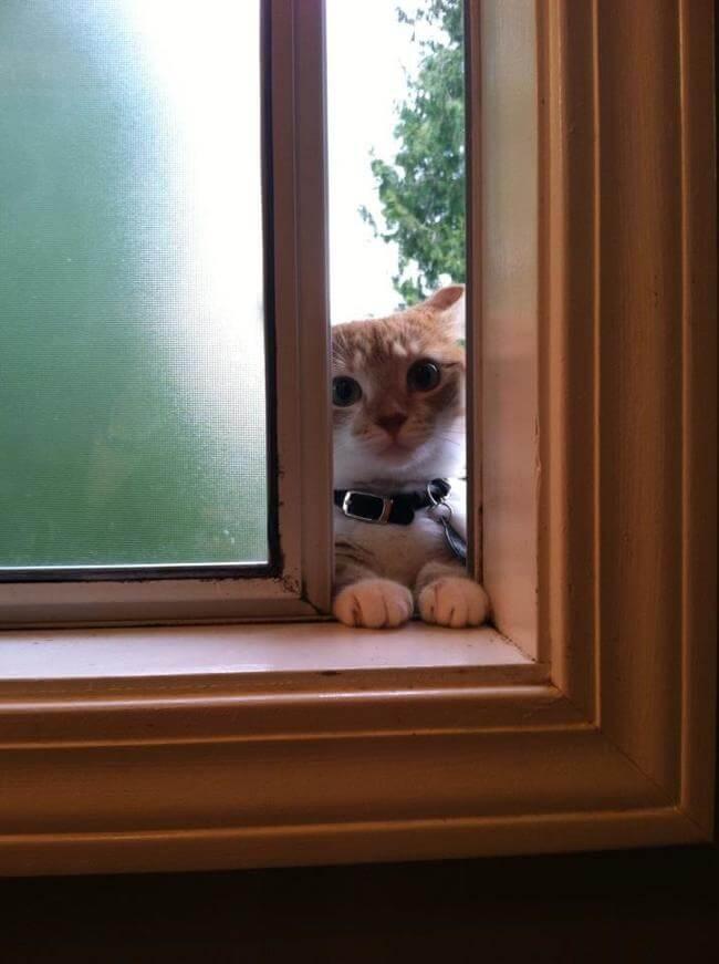 3ec35bf9fb062c57f9a6cb78eed3ebd8 11 - Buka Pintu !! Jangan Biarkan 13 Kucing ini Mati Konyol
