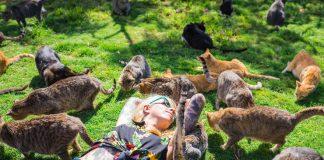 Jika suatu saat kamu berkunjung ke Hawaii, jangan lewatkan untuk merasakan sensasi bersama ratusan kucing di surga pecinta kucing, Lanai.