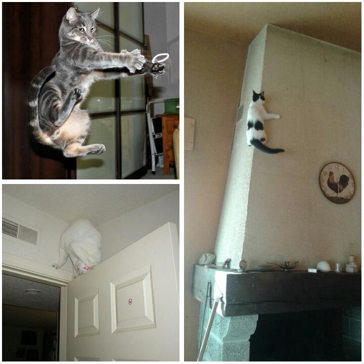 PhotoGrid 1508113119761 - Jangan Tertipu dengan Penampilannya yang Lucu, Ini Bukti Bahwa Kucing adalah Ninja