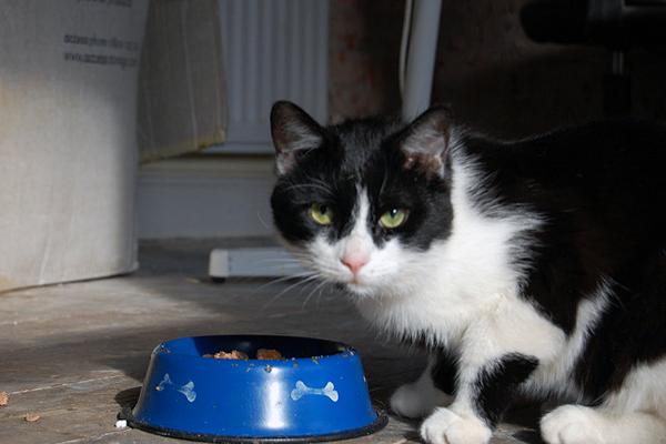 berapa banyak kita harus memberi makan kucing - Berapa Banyak Kita Harus Memberi Makan Kucing ?