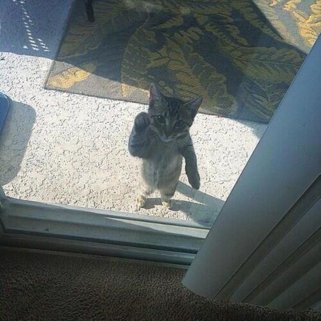 Buka pintu ! Jangan biarkan 13 kucing ini mati konyol.