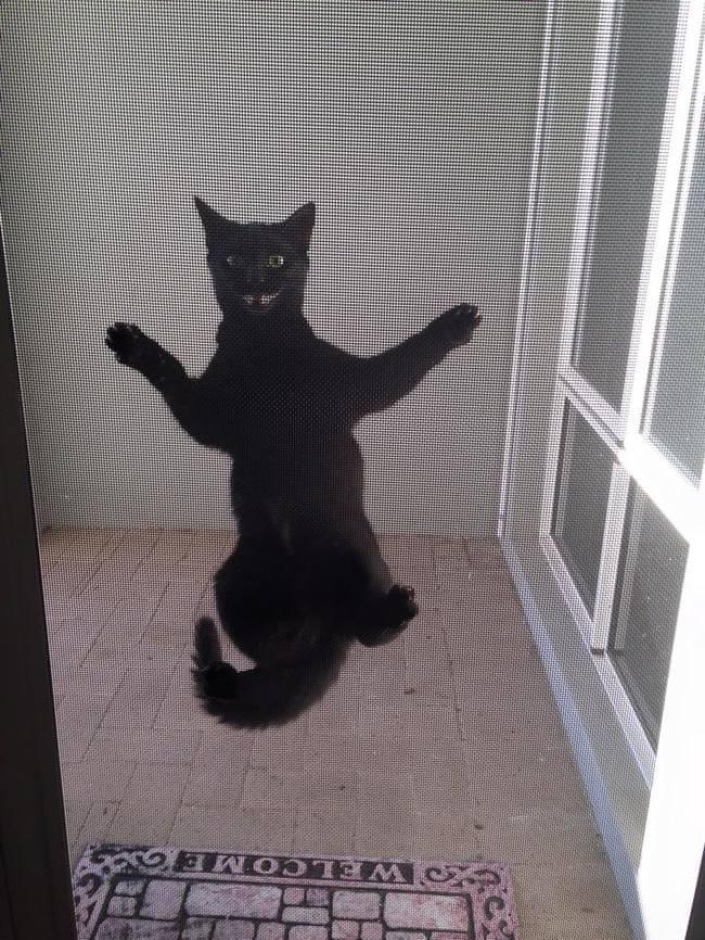 buka pintu Jangan biarkan 13 kucing ini mati konyol22 - Buka Pintu !! Jangan Biarkan 13 Kucing ini Mati Konyol
