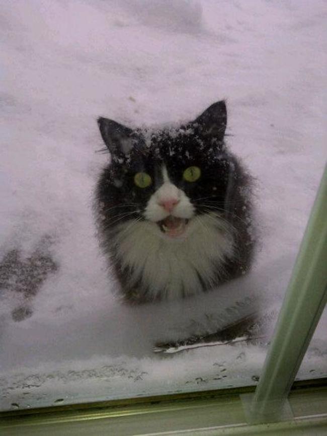 buka pintu Jangan biarkan 13 kucing ini mati konyol5 - Buka Pintu !! Jangan Biarkan 13 Kucing ini Mati Konyol