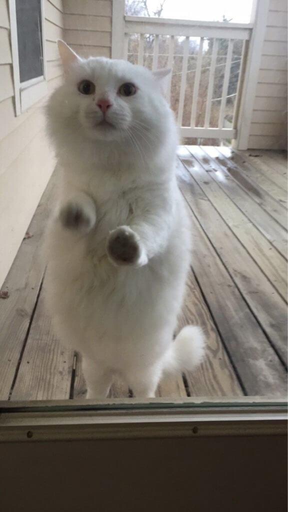 buka pintu Jangan biarkan 13 kucing ini mati konyol7 - Buka Pintu !! Jangan Biarkan 13 Kucing ini Mati Konyol