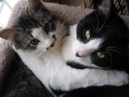 bull the gay cat - Seekor Kucing Dibuang Majikannya karena Gay