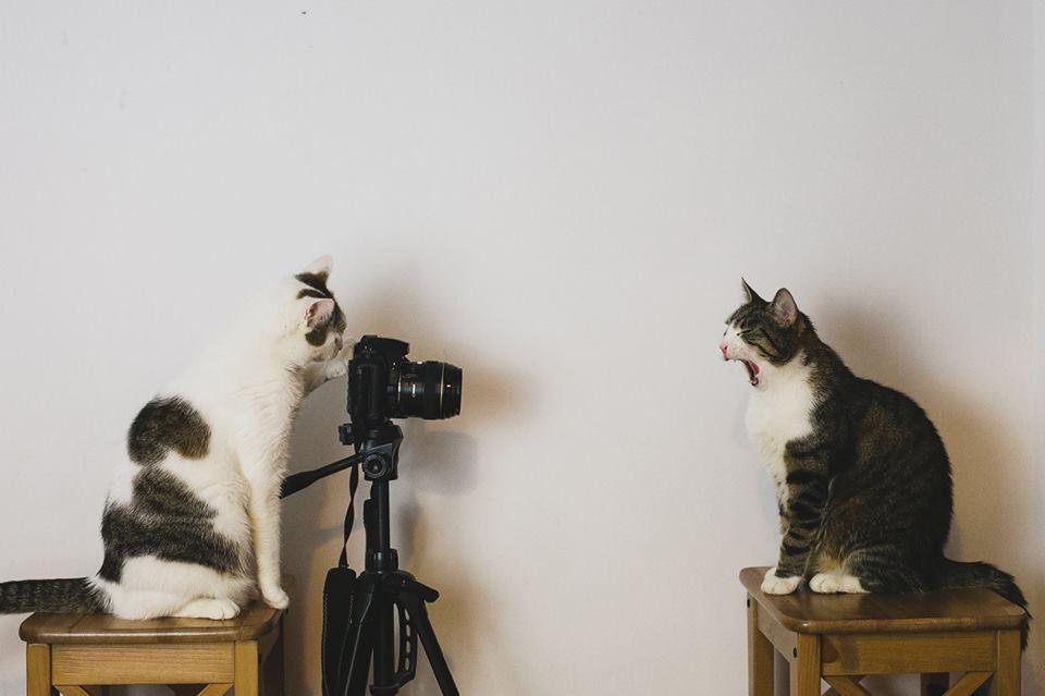 fotografer buktikan kucing cacat tetap menggemaskan - Fotografer Bidik Pose Kucing Cacat, Buktikan Bahwa Mereka Tak Kalah Menggemaskan