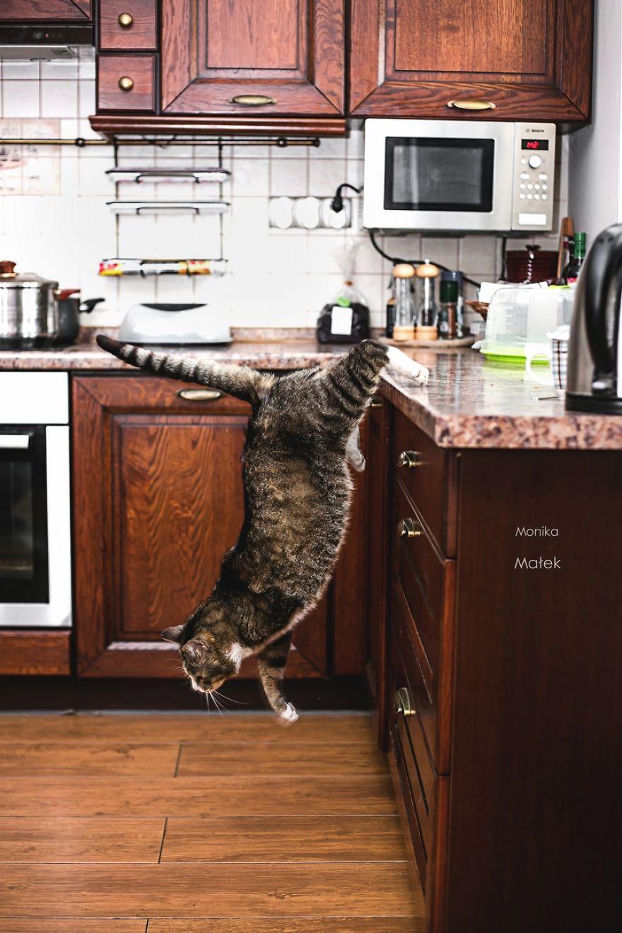fotografer buktikan kucing cacat tetap menggemaskan1 - Fotografer Bidik Pose Kucing Cacat, Buktikan Bahwa Mereka Tak Kalah Menggemaskan
