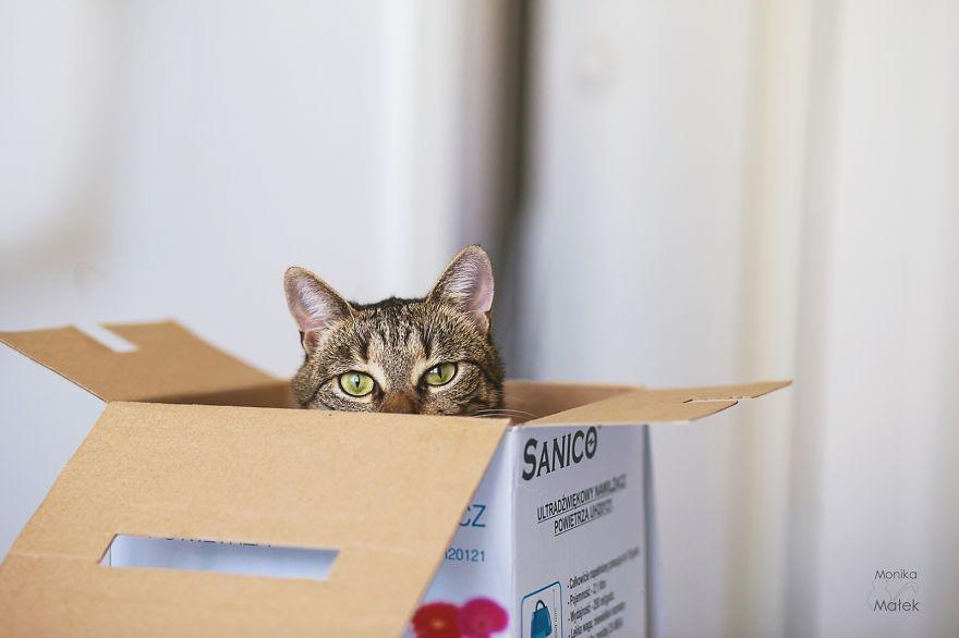fotografer buktikan kucing cacat tetap menggemaskan11 - Fotografer Bidik Pose Kucing Cacat, Buktikan Bahwa Mereka Tak Kalah Menggemaskan