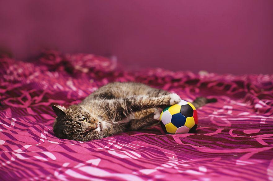 fotografer buktikan kucing cacat tetap menggemaskan12 - Fotografer Bidik Pose Kucing Cacat, Buktikan Bahwa Mereka Tak Kalah Menggemaskan