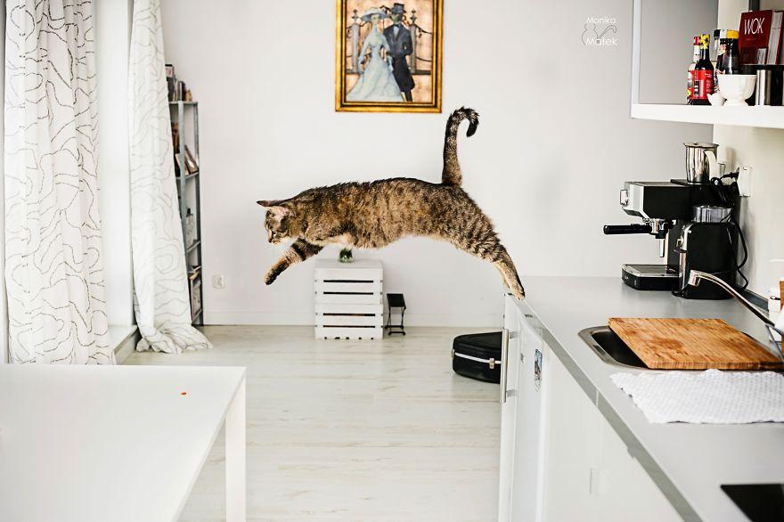 fotografer buktikan kucing cacat tetap menggemaskan3 - Fotografer Bidik Pose Kucing Cacat, Buktikan Bahwa Mereka Tak Kalah Menggemaskan