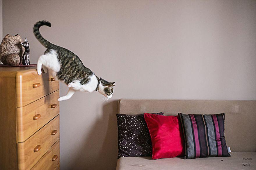 fotografer buktikan kucing cacat tetap menggemaskan5 - Fotografer Bidik Pose Kucing Cacat, Buktikan Bahwa Mereka Tak Kalah Menggemaskan