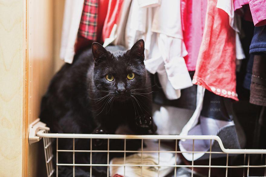 fotografer buktikan kucing cacat tetap menggemaskan8 - Fotografer Bidik Pose Kucing Cacat, Buktikan Bahwa Mereka Tak Kalah Menggemaskan