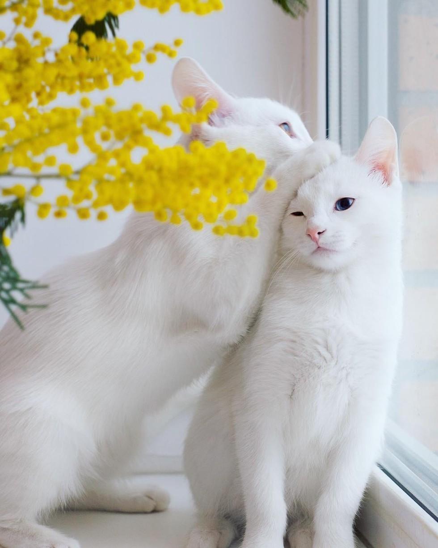 iriss dan abyss4 - Kucing Suka Menjilati Kamu ?. Ini Alasannya