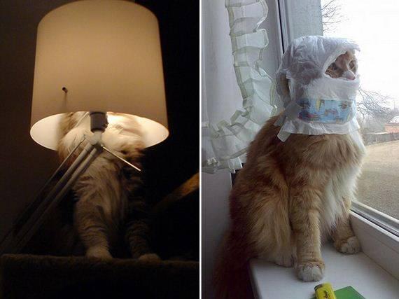 kucing adalah ninja12 - Jangan Tertipu dengan Penampilannya yang Lucu, Ini Bukti Bahwa Kucing adalah Ninja