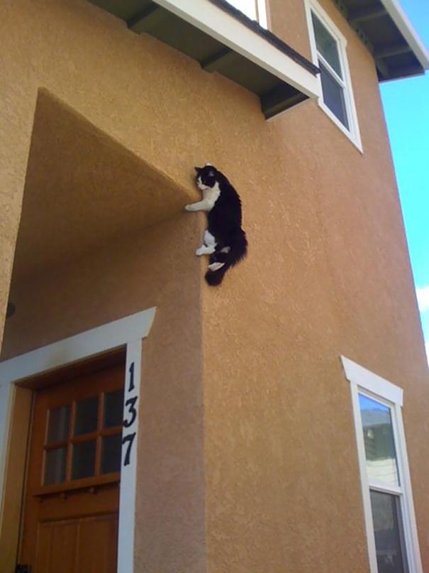 kucing adalah ninja2 - Jangan Tertipu dengan Penampilannya yang Lucu, Ini Bukti Bahwa Kucing adalah Ninja