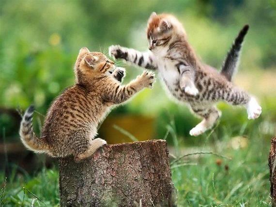 kucing adalah ninja4 - Jangan Tertipu dengan Penampilannya yang Lucu, Ini Bukti Bahwa Kucing adalah Ninja