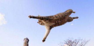 Bentuk latihan ninja kucing.