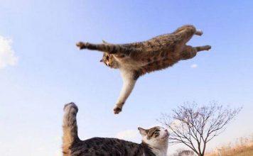 kucing adalah ninja5 356x220 - Beranda