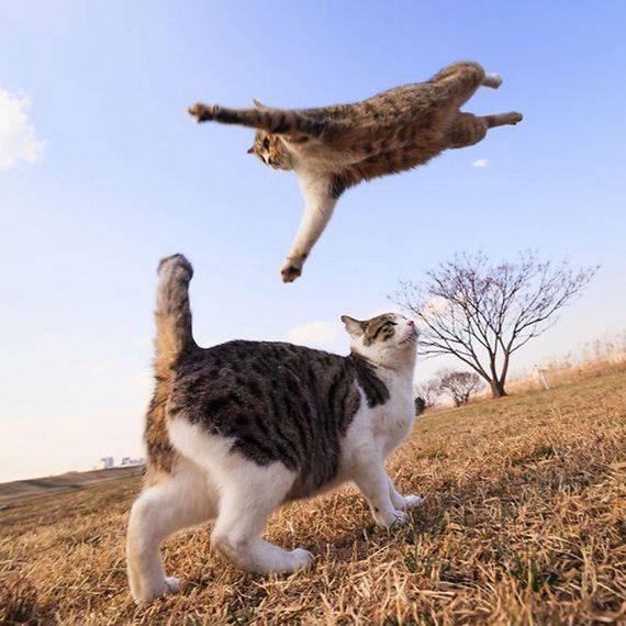 kucing adalah ninja5 - Jangan Tertipu dengan Penampilannya yang Lucu, Ini Bukti Bahwa Kucing adalah Ninja