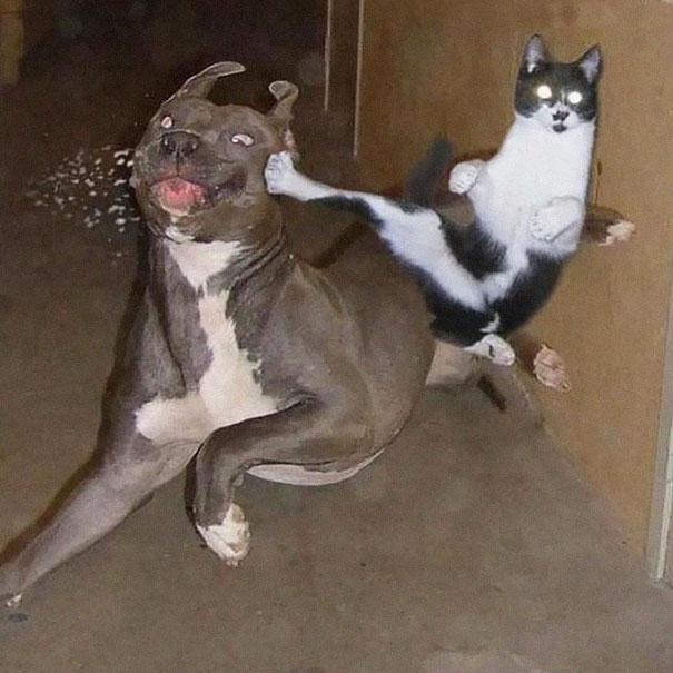 kucing adalah ninja6 - Jangan Tertipu dengan Penampilannya yang Lucu, Ini Bukti Bahwa Kucing adalah Ninja