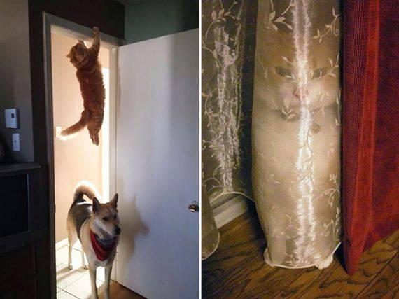 kucing adalah ninja9 - Jangan Tertipu dengan Penampilannya yang Lucu, Ini Bukti Bahwa Kucing adalah Ninja